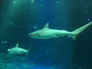 Tropen-Aquarium Hagenbeck (Hamburg 2013)